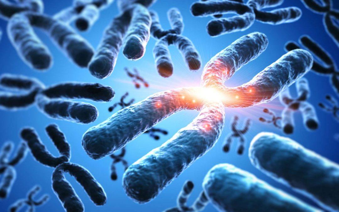 Les principales différences entre l'ADN humain et l'ADN animal