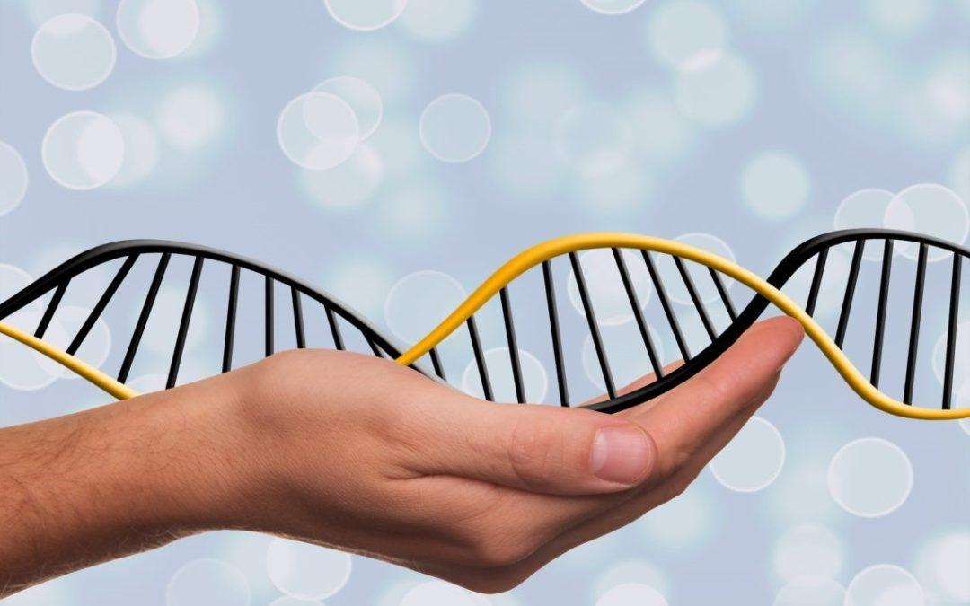 Entre ARN et ADN, différences et similarités