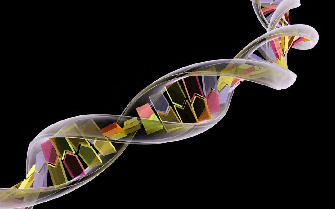 transcription ADN