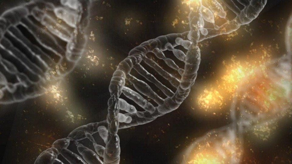 Comment procéder à une extraction ADN?