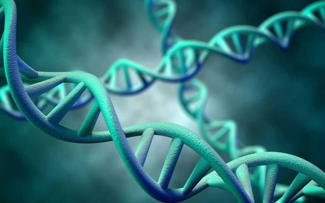 Tout savoir sur l'expression du patrimoine génétique
